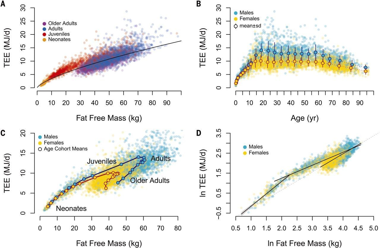 Metabolism calories burnt during different periods of life