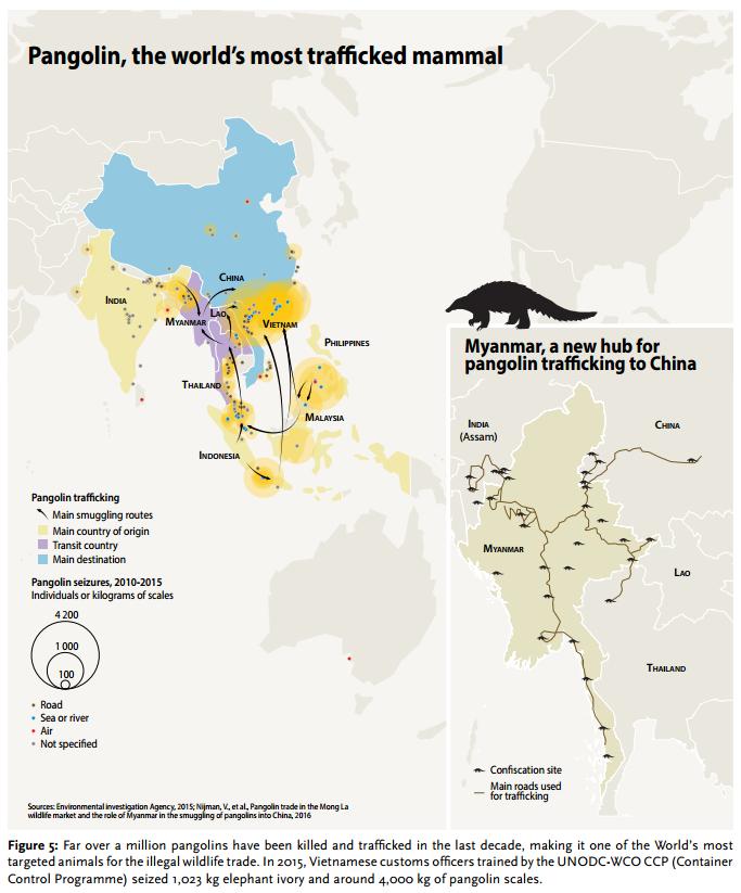 Pangolin, the world's most trafficked mammal