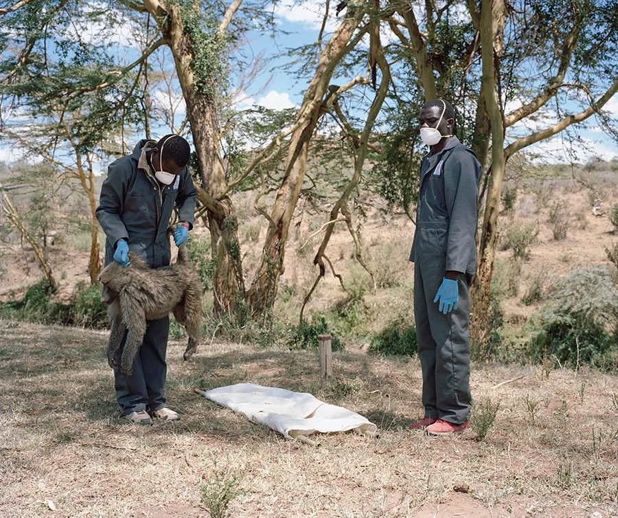 Mpala Research Centre, northern Kenya disease baboon disease transmission infection outbreak