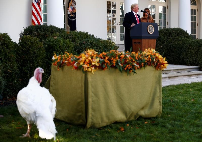 One of the 72nd National Thanksgiving Turkeys walks in the Rose Garden as U.S. President Donald Trump speaks next to first lady Melania Trump during the presentation and pardoning of the National turkeys at the White House in Washington, U.S., November 26, 2019. REUTERS/Tom Brenner - RC28JD92TDBZ