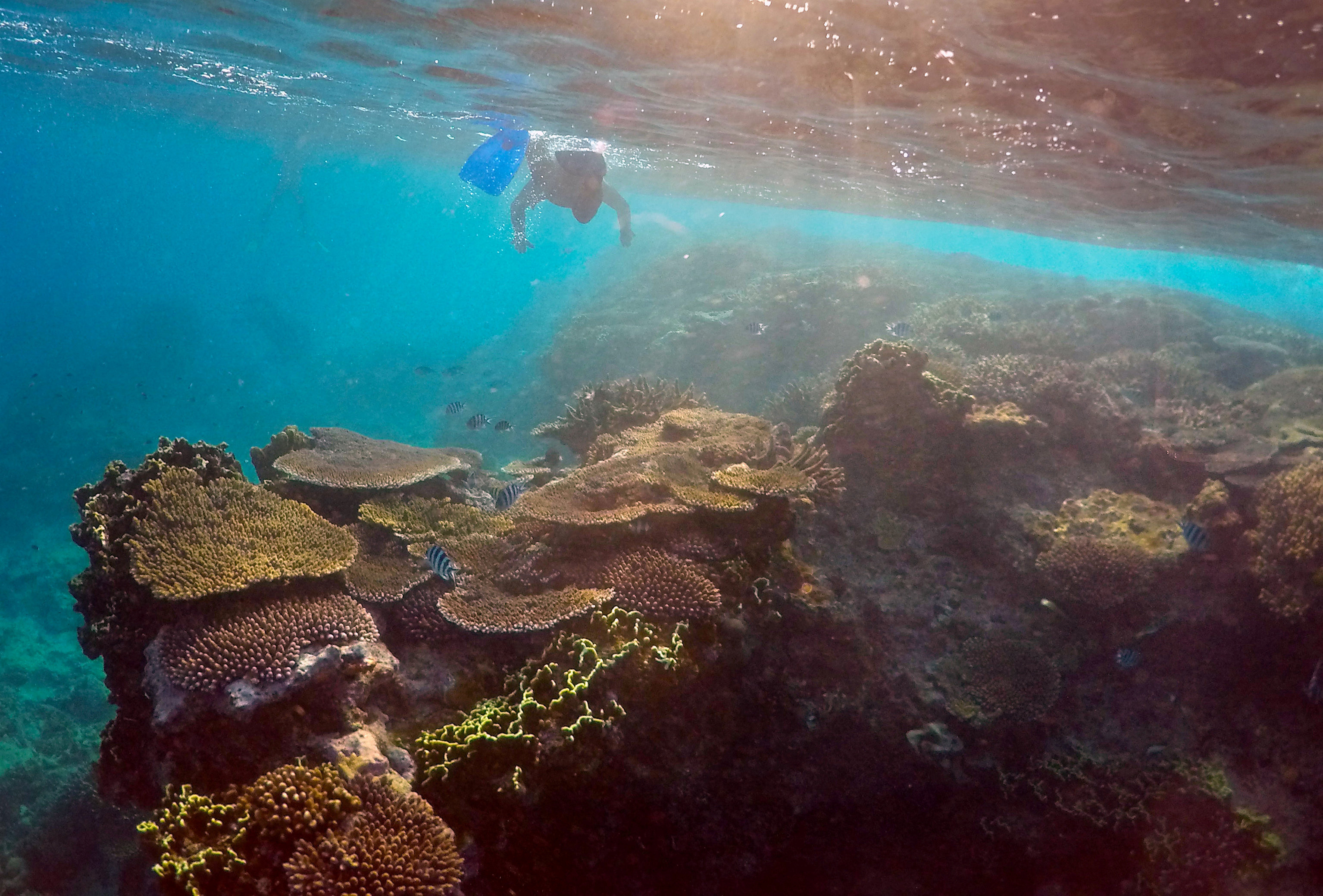 A senior ranger inspects the Great Barrier Reef off the Australian coast.