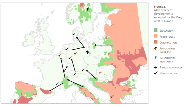 Recent migratory trends of wolf populations in Europe