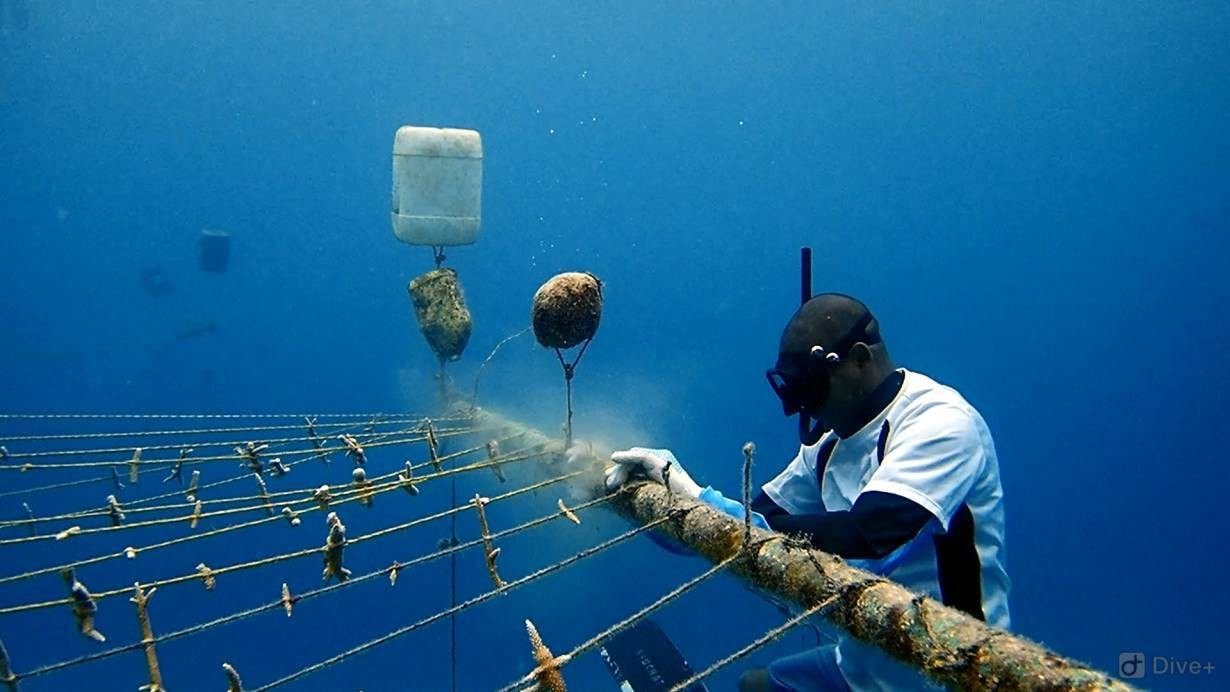 A fisherman works at a coral nursery in the Caribbean waters off the island of San Andres, Colombia.