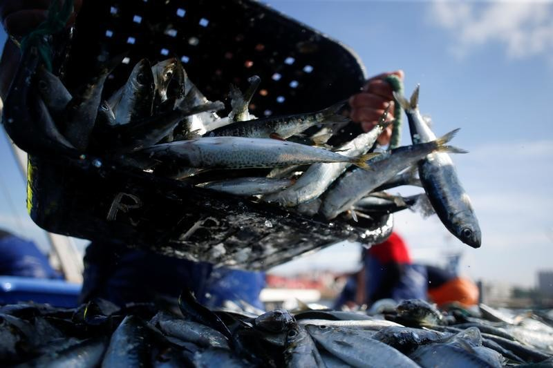 A fisherman unloads sardines at the port in Matosinhos, Portugal, May 28, 2018. Picture taken May 28, 2018.   To match Special Report OCEANS-TIDE/SARDINES   REUTERS/Pedro Nunes - RC16E168F4B0