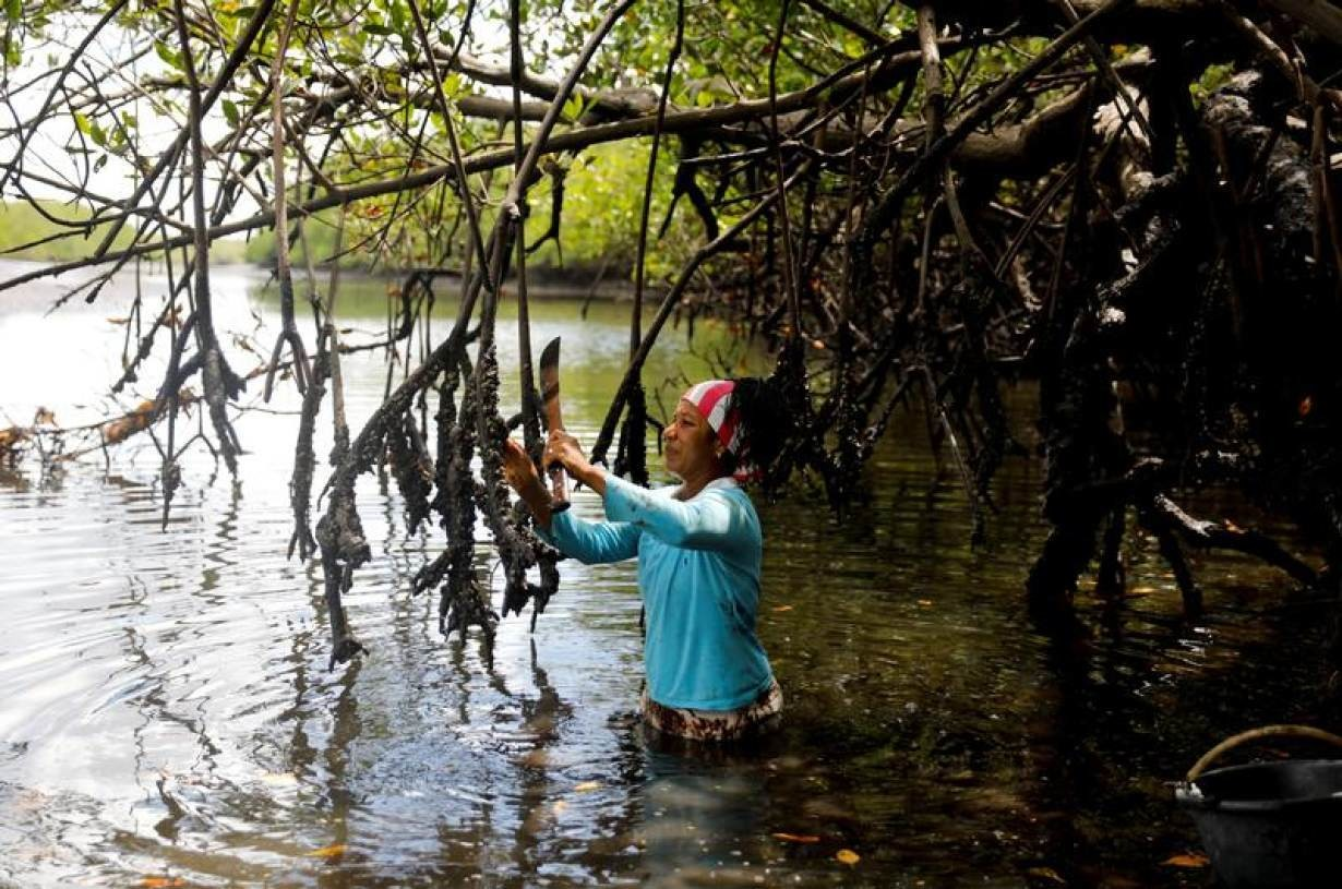 Vandeka, wife of fisherman Jose da Cruz, harvests mangrove oysters on the Caratingui river, in Cairu, state of Bahia, Brazil, April 5, 2019.