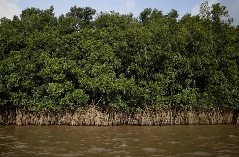 Mangroves grow on the banks of Oiapoque River on the coast of Amapa state, near Oiapoque city, northern Brazil, April 3, 2017. REUTERS/Ricardo Moraes  SEARCH
