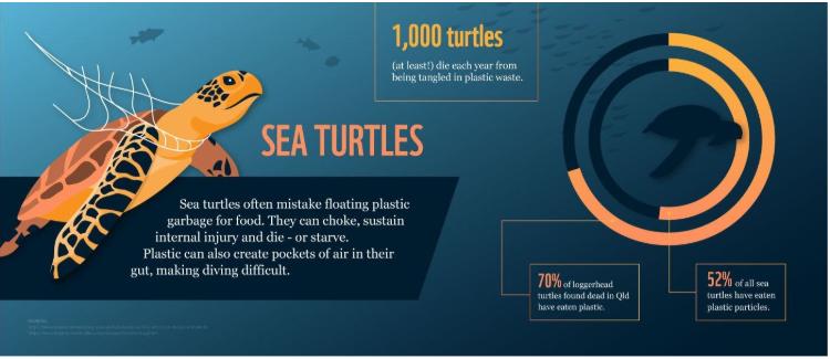 Around 1,000 turtles die each year from being tangled in plastic waste