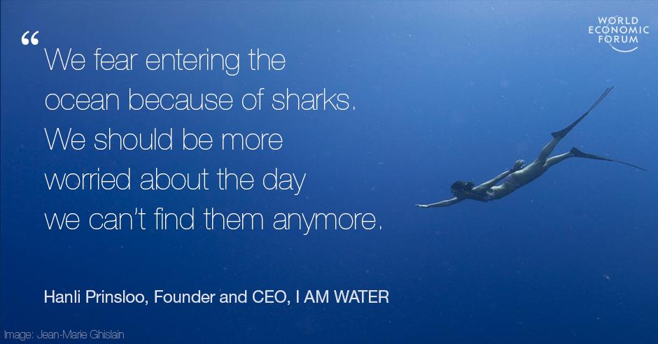 Image result for stop killing sharks