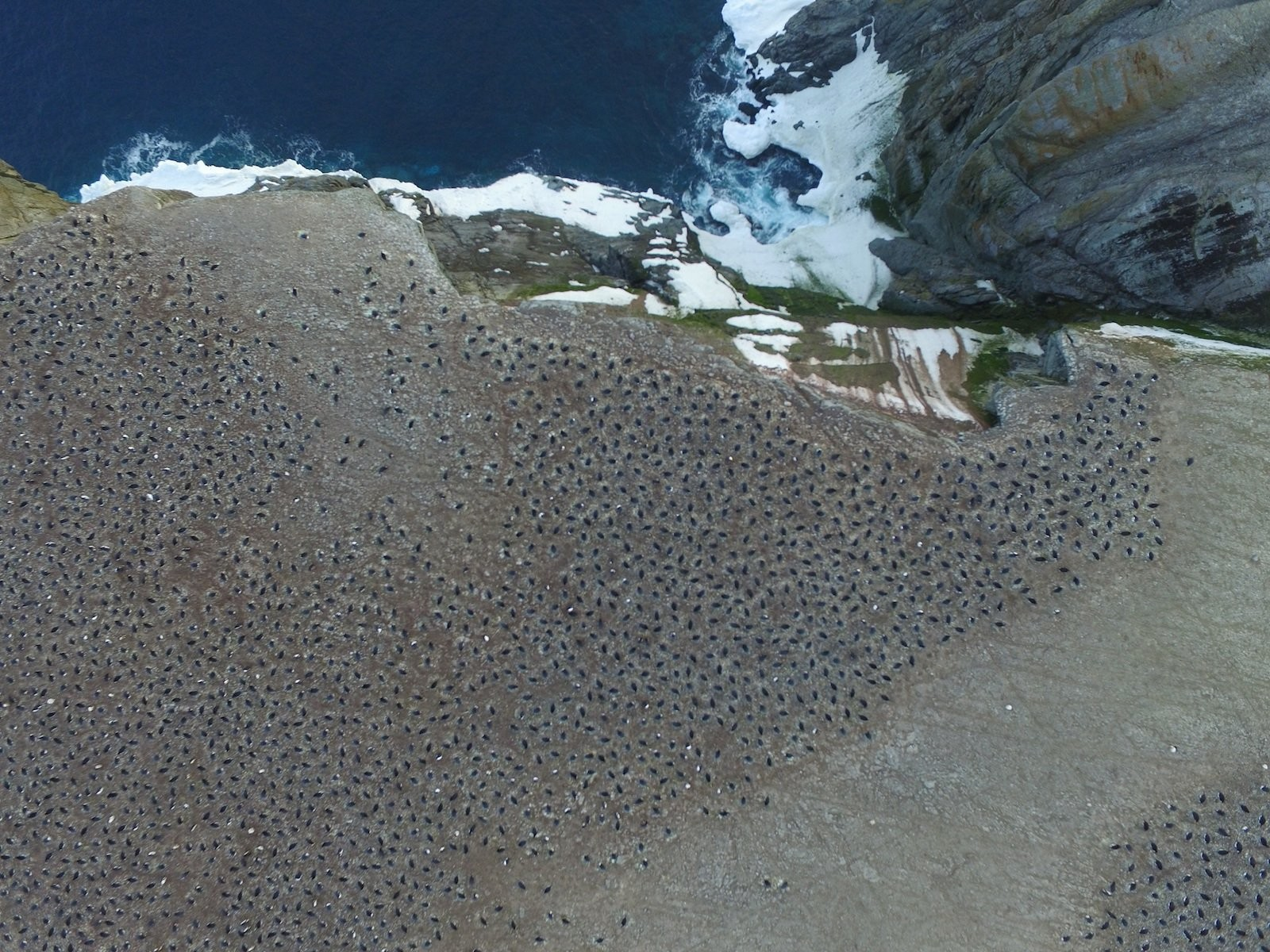 A 'supercolony' of 1.5 million penguins has been discovered - by accident