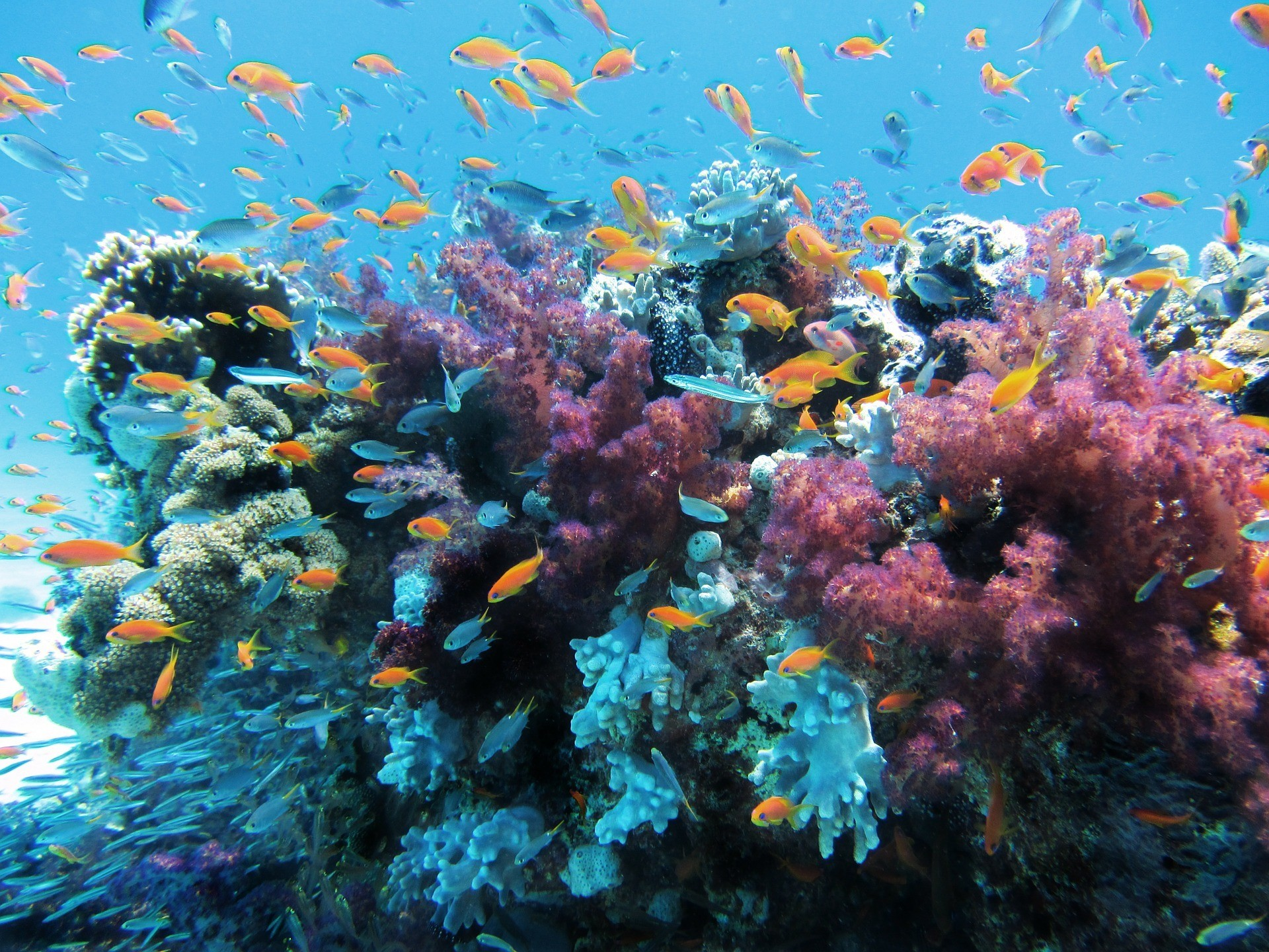 a picture of fish in coral