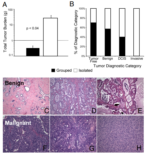 Effect of long-term social isolation on mammary tumor growth and diagnosis at 15 months. (A) Tumor burden (mean  SEM) after living alone or in noncrowded social groups. (B) Rats with ductal carcinoma in situ (DCIS) or malignant tumors were primarily socially isolated; those with benign or no tumors lived in groups. (C–H) Wide range of naturally developing mammary tumors: (C) fibroadenoma; (D) lactating adenoma; (E) intraductal papilloma; (F) DCIS; (G) invasive ductal carcinoma; (H) fibrosarcoma.