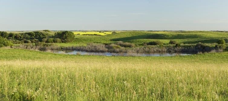 A prairie wetland in Allan Hills, Sask.