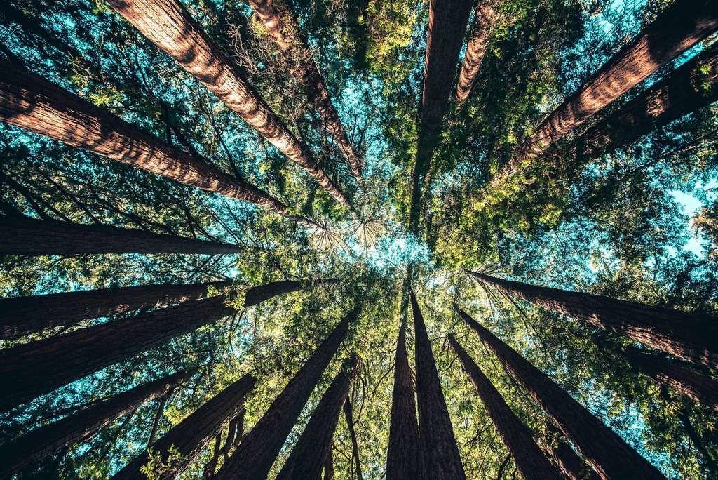 Mauvais élève du climat mondial, l'Australie veut planter 400.000 hectares de forêt d'ici 2050.
