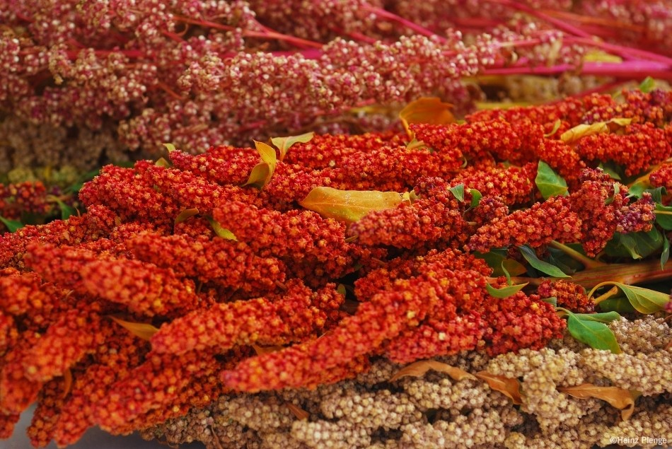 Traditional foods have been around for centuries, but have become neglected as more productive, profitable or improved crops replaced them in farming systems. Yet, many are highly nutritious, naturally climate resilient and even potentially valuable in global trade, making them a great ally for a Zero Hunger future.