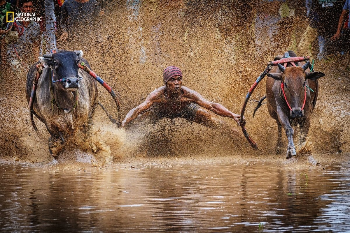 15 Incredible Photos From National Geographic S Nature Photographer Of The Year Contest World Economic Forum