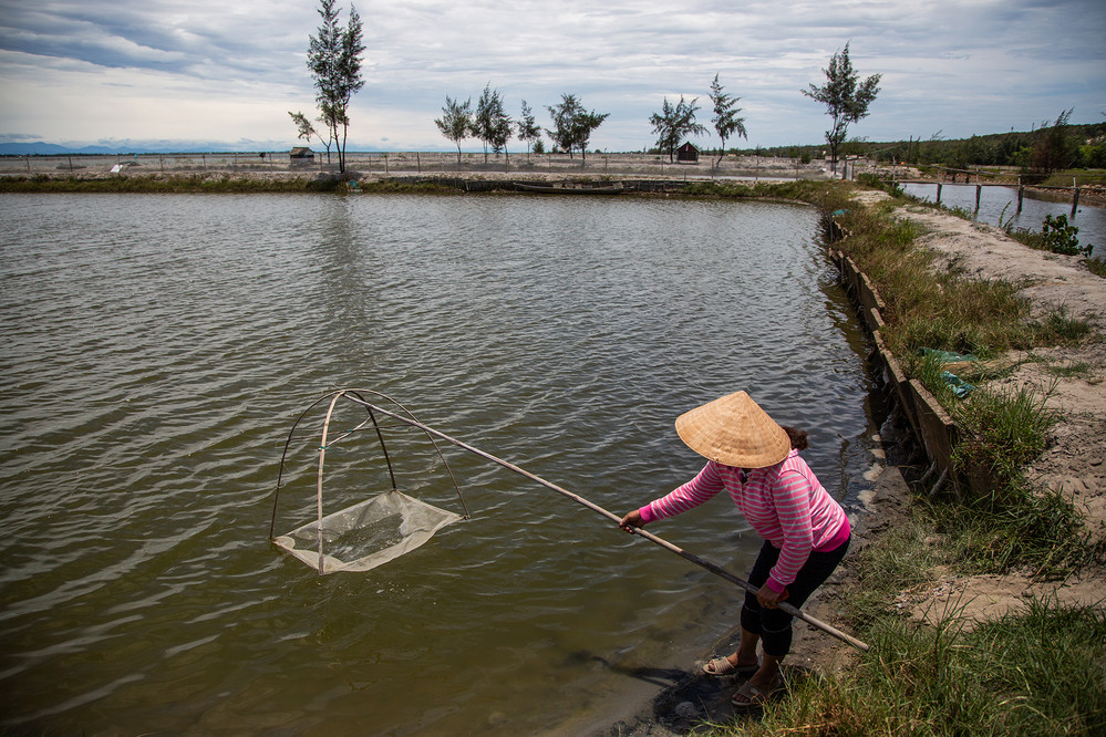Le Thi Xuan Lan checks on her shrimp farm near her home in the Hai Duong Commune in Hue. She was one of the local women recruited to plant mangroves in 2018.