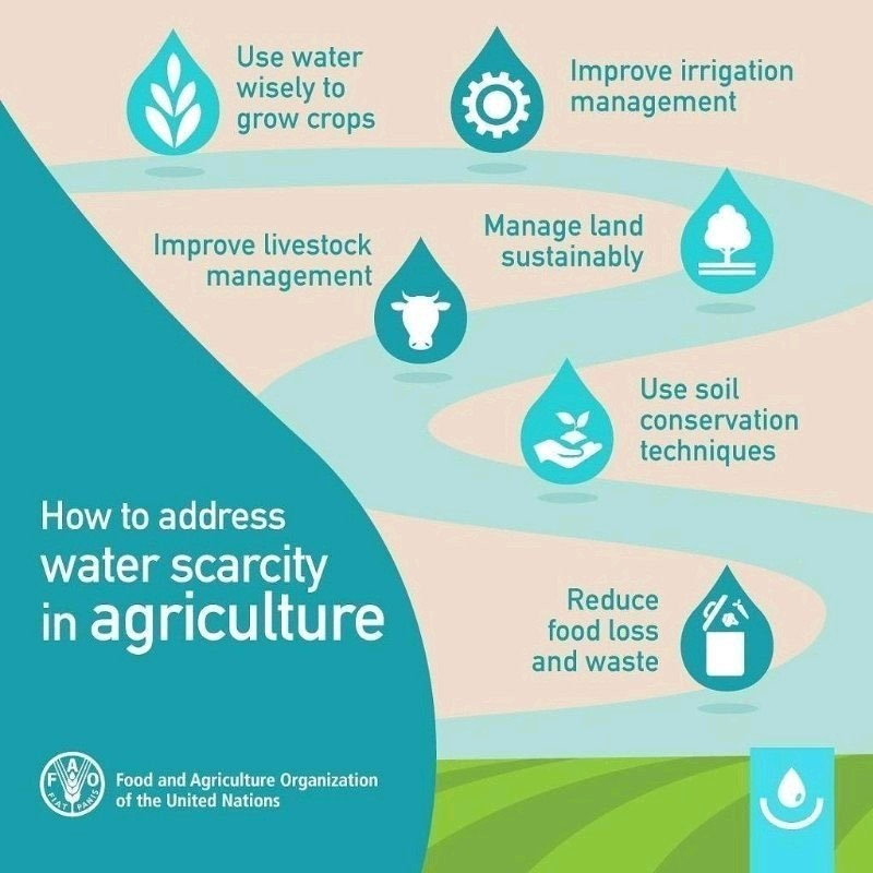 Water management is paramount in agriculture, which accounts for 70% of global water use