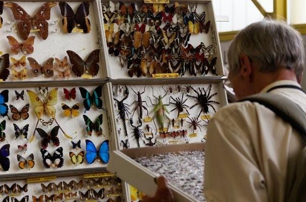 Bourse aux insectes.
