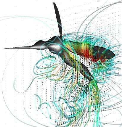 Complex flow streamlines generated by the flapping wing of a mosquito in flight.