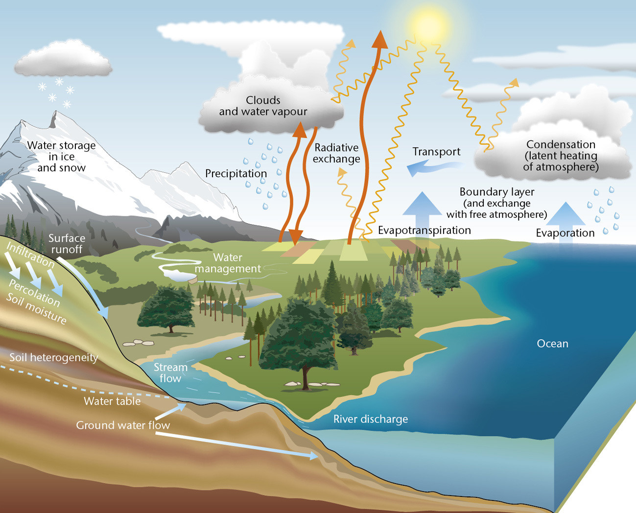 The water cycle: Water moves continuously between land, oceans and the atmosphere.