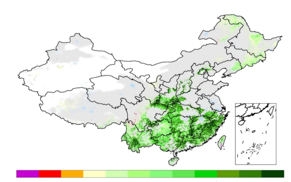 Net gain (green) and loss (yellow to purple) in leaf area from forests in China from 2000-16. Grey shows changes to other types of vegetation. White shows land with no vegetation.