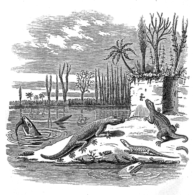 In this illustration from 'Air-Breathers of the Coal Period' by John William Dawson, 'Hylonomus Lyelli' is represented leaping in pursuit of an insect.