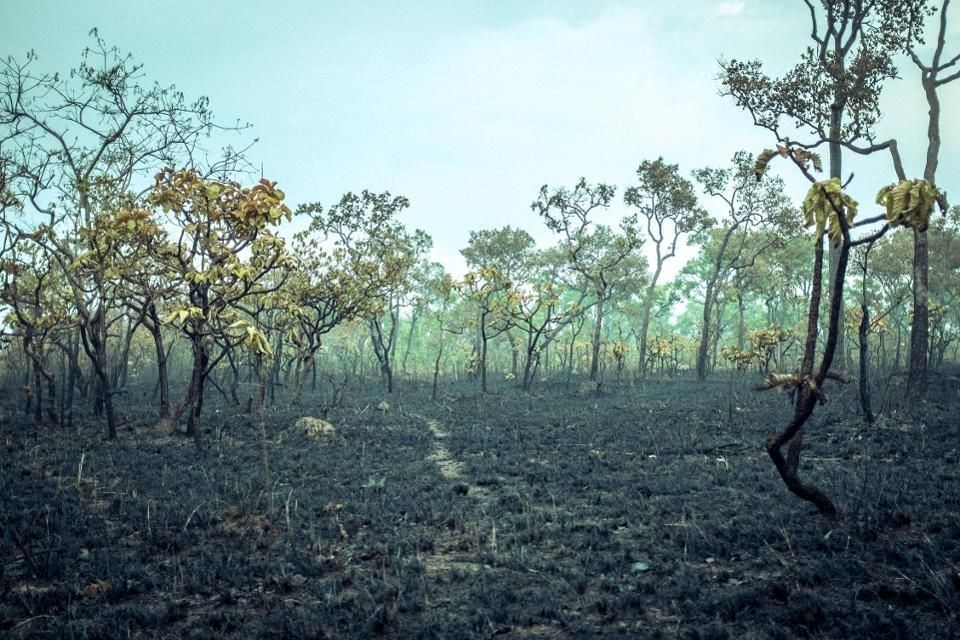 Burnt Down Amazon Tropical Rain Forest, Richest Ecosystem on Earth Destroyed to Ashes for Cow Grazing and Soya Crops