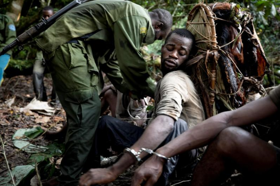 A poacher with bushmeat on his back is detained by park rangers, as poaching is illegal in Salonga National Park.
