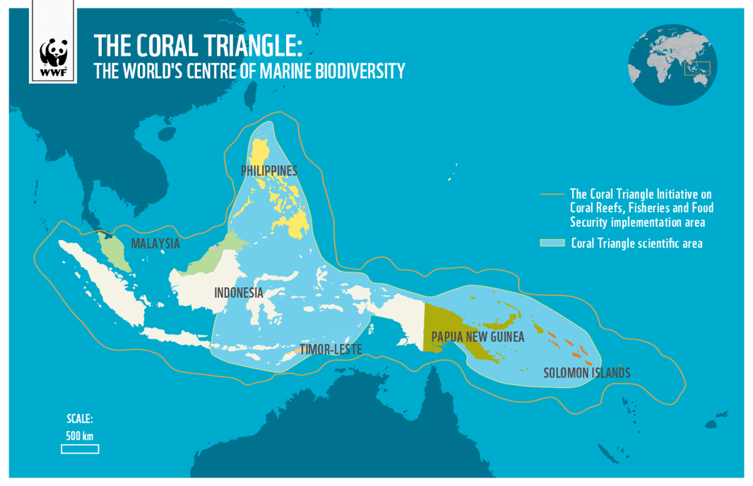 The Coral Triangle is one of the world's most biodiverse regions.
