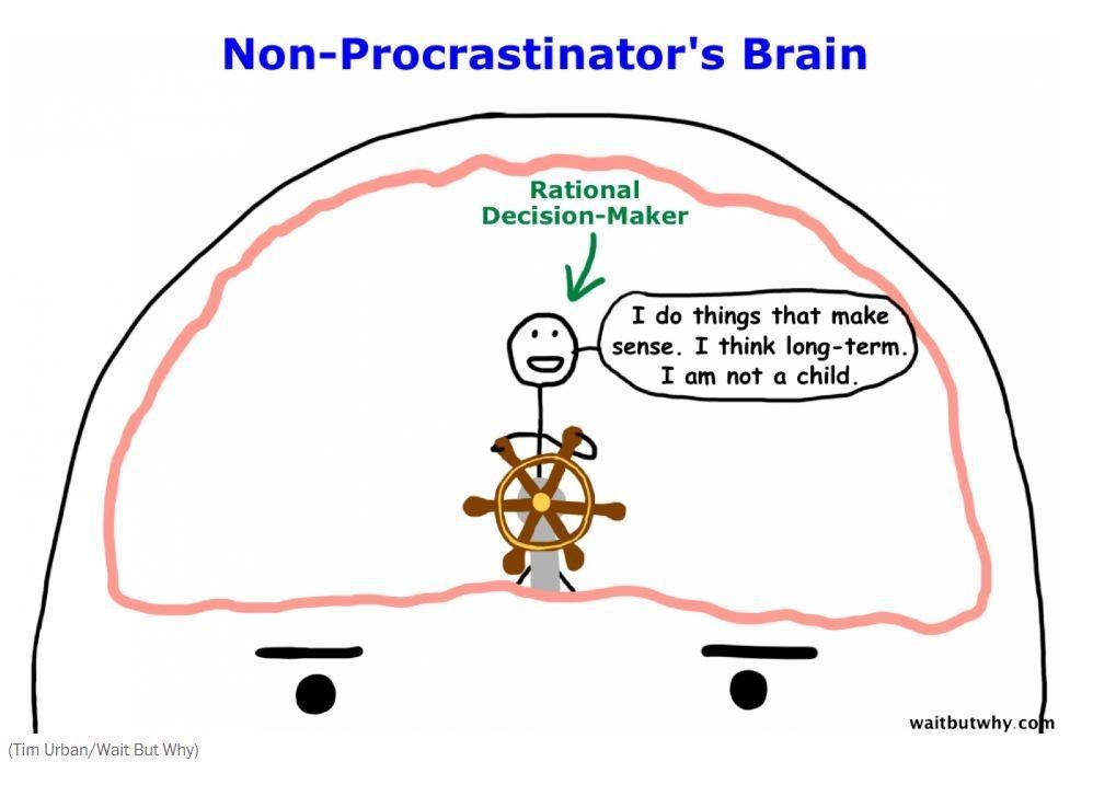 Non-procrastinator's brain