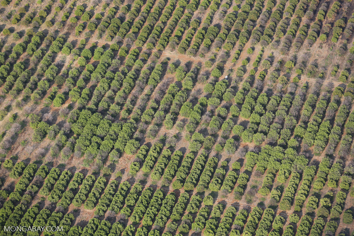 sky view of crops growing in Africa
