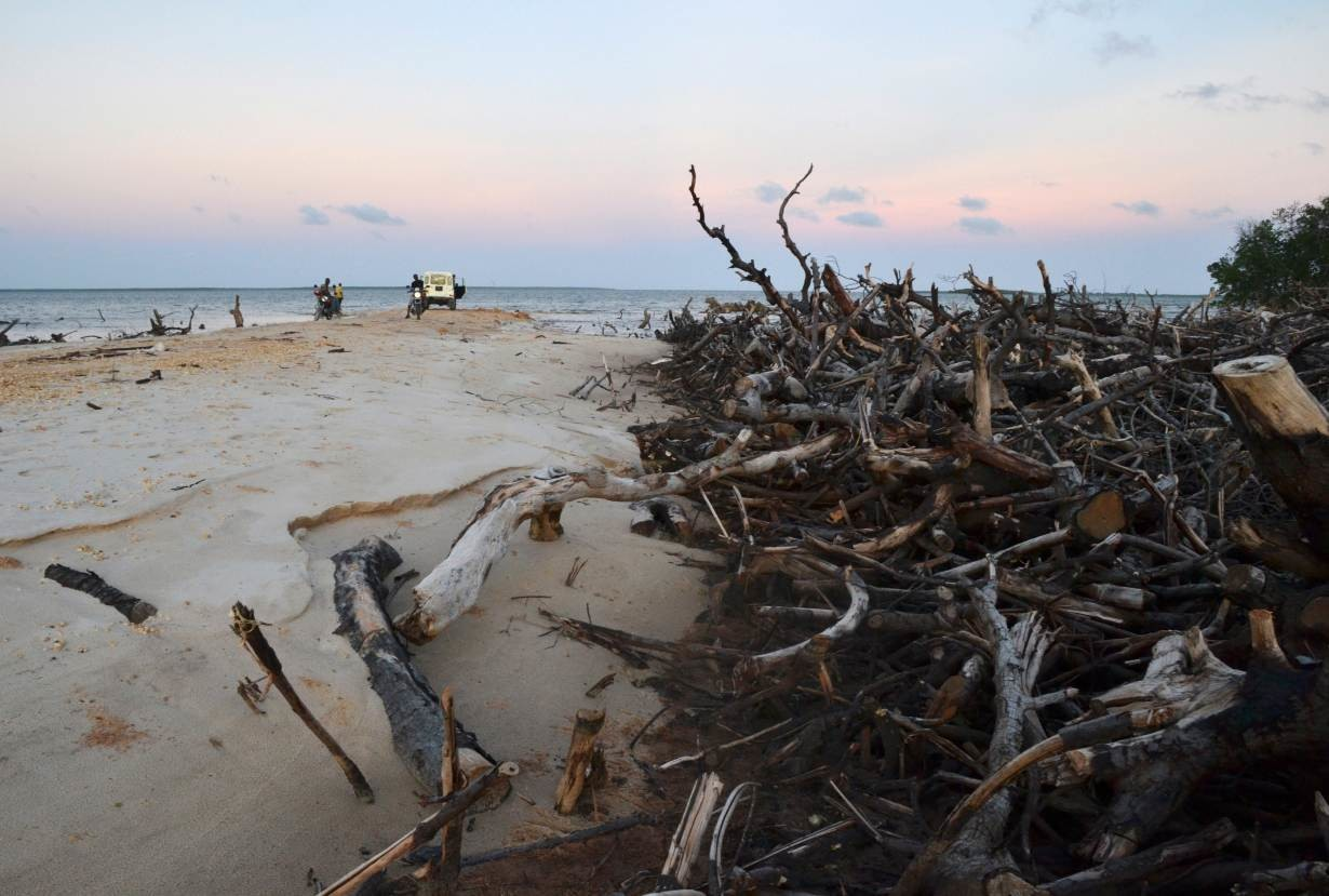 Dead mangroves cover a section of the Indian Ocean beach strip in Lamu Island, where the construction of a new port is due to begin, along the Kenyan coast April 17, 2013.