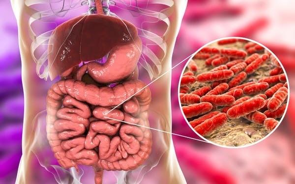 Des billions de bactéries vivent dans nos entrailles.