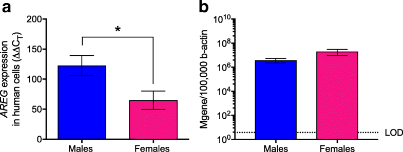 Amphiregulin (Areg) expression is greater in respiratory epithelial cells derived from human male than female donors following seasonal influenza A virus infection. Primary human type II alveolar epithelial lung cells were isolated from male and female donors and either mock-infected or infected with a seasonal H1N1 (A/HK/54/98) at a high MOI (MOI=5). Amphiregulin mRNA expression was measured 24 hpi in cells derived from female (n=6) and male (n=4) donors (a). Virus levels were measured using the number of M-gene copies normalized to β-actin in cells derived from female (n=6) and male (n=4) donors (b). Areg mRNA expression was normalized to Gapdh and to mock-infected controls using the ΔΔCt method. Data represent means±SEM from two independent experiments, with significant differences represented by asterisks (*)