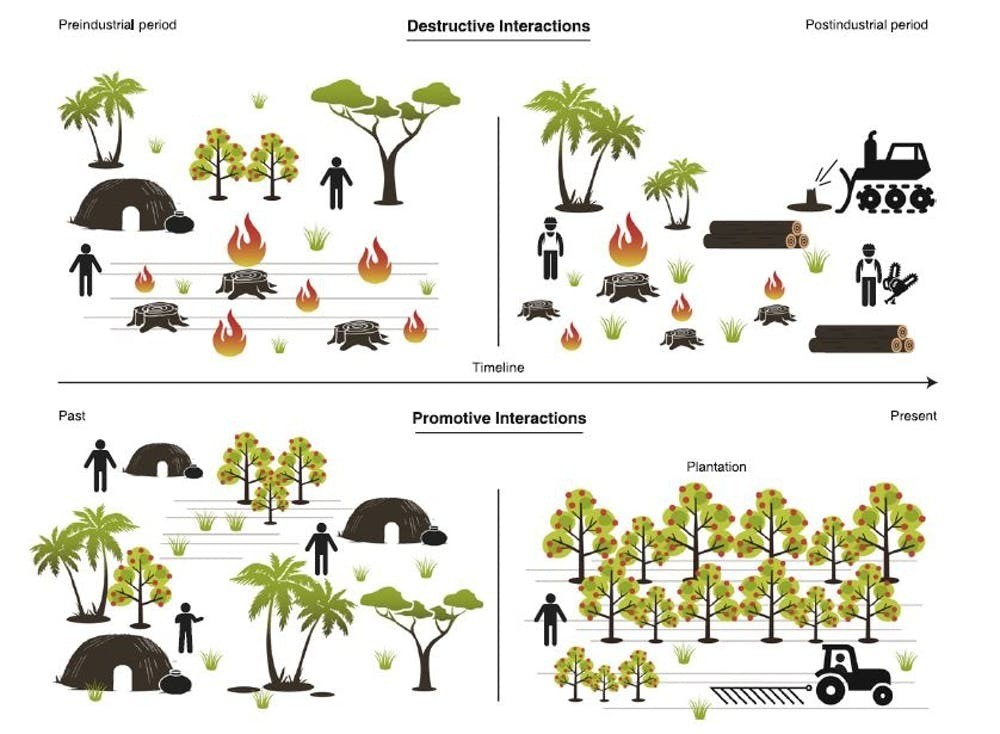 Traditional forest management encouraged biodiversity modern methods tree growth indigenous people