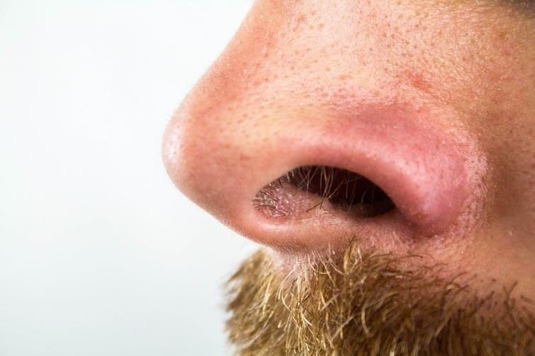 nose hair beard moustache sneeze