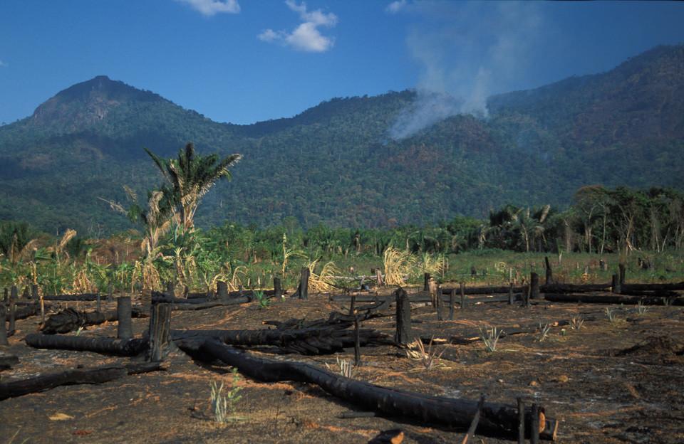 Forest burning near the Kanuku mountains