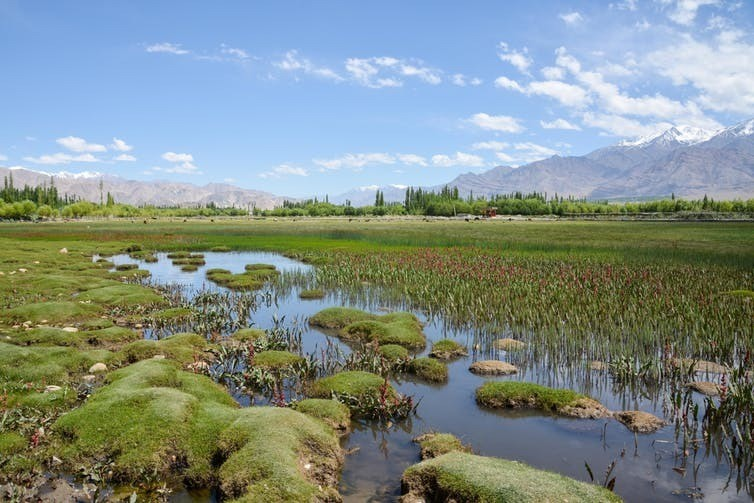 Wetland in Leh Ladakh, India. The expansion of tropical wetlands further north released more methane to the atmosphere, accelerating global warming.