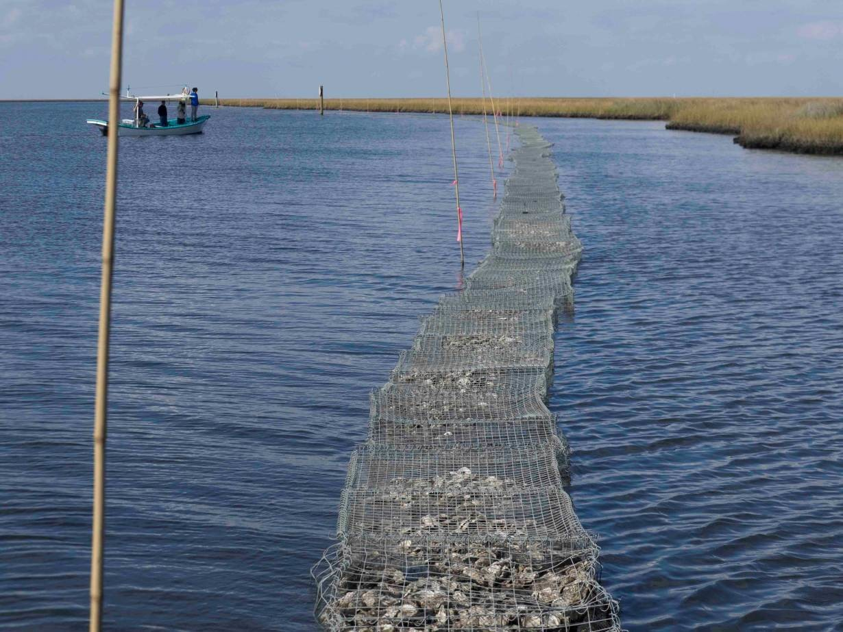 Local scientists examine a portion of a newly constructed oyster reef in Lake Athanasio, Louisiana, November 18, 2016.