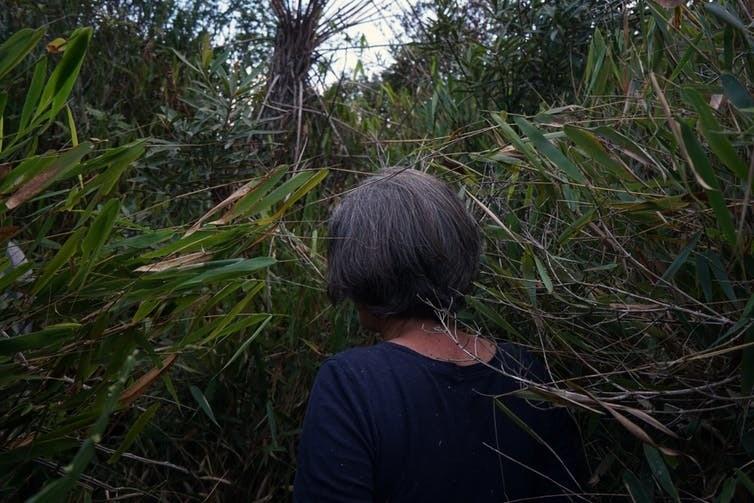 La forêt tropicale recouvre encore partiellement le bassin.