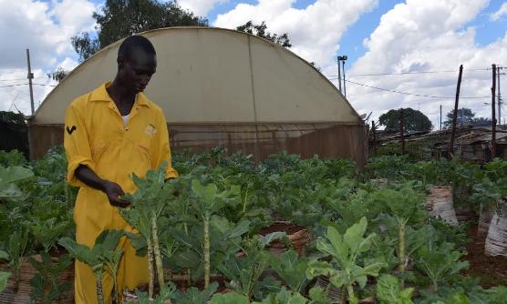 The sack farming initiative in Kibera, Nairobi.