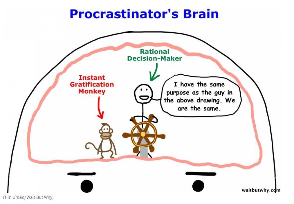 Procrastinator's brain