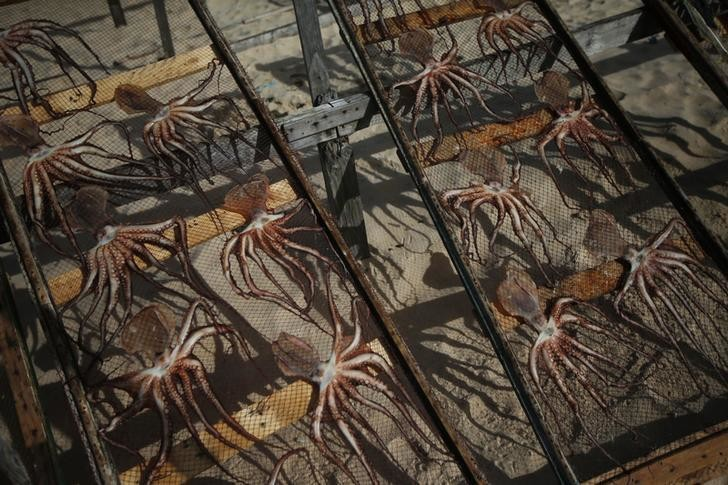 Salted octopus are placed out to dry on a beach in Nazare October 29, 2013. REUTERS/Rafael Marchante