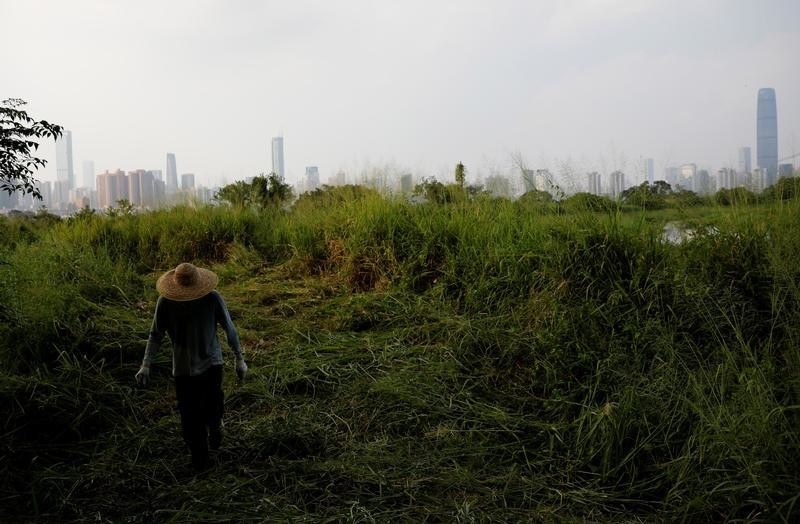A farmer works in a filed at Lok Ma Chau village in Hong Kong, China, October 21, 2019. High rise buildings in Shenzhen are seen in the background. REUTERS/Kim Kyung-Hoon - RC2FAE9MCD24