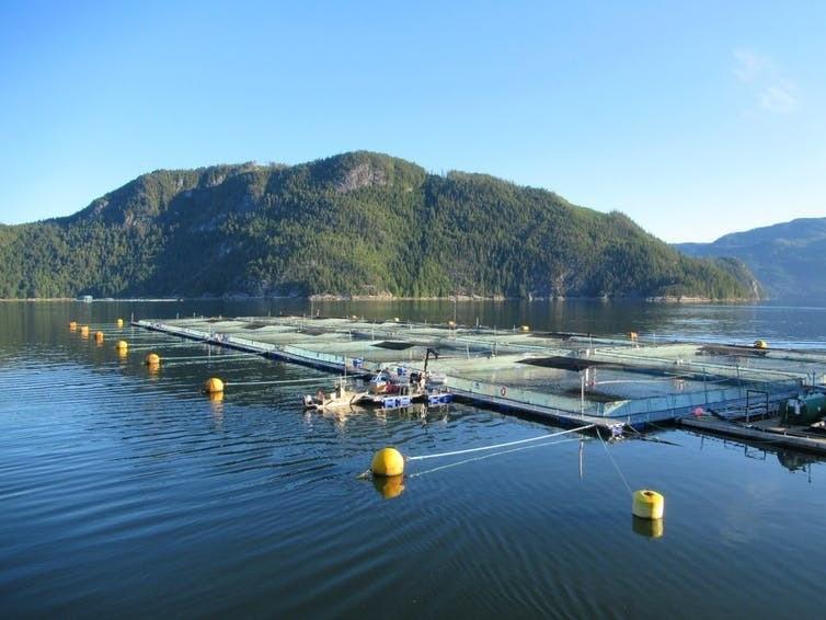 imagen de la granja de salmón de Grieg Seafood en Clio Channel, Broughton Archipelago, British Columbia, Canadá, en asociación con Tlowitsis First Nation.