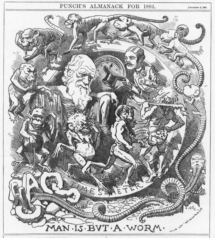 'Man Is But A Worm' caricature of Darwin's theory in the Punch almanac for 1882.