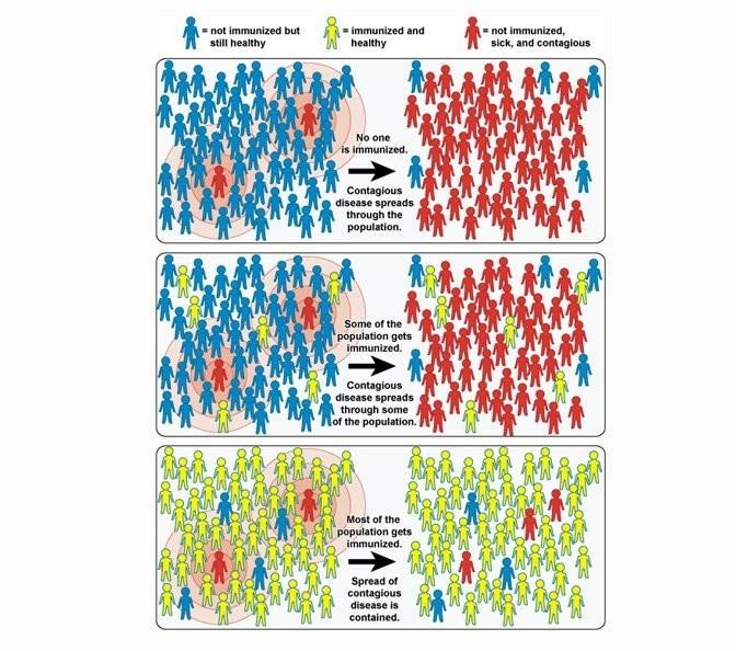 Can herd immunity really protect us from coronavirus?