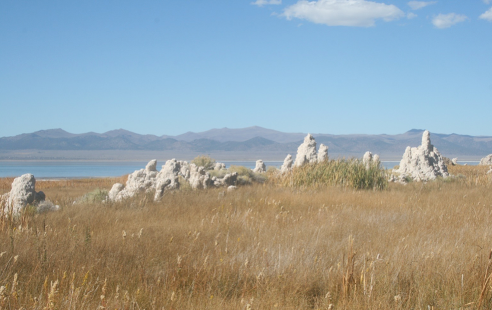 Tufa towers on the shoreline
