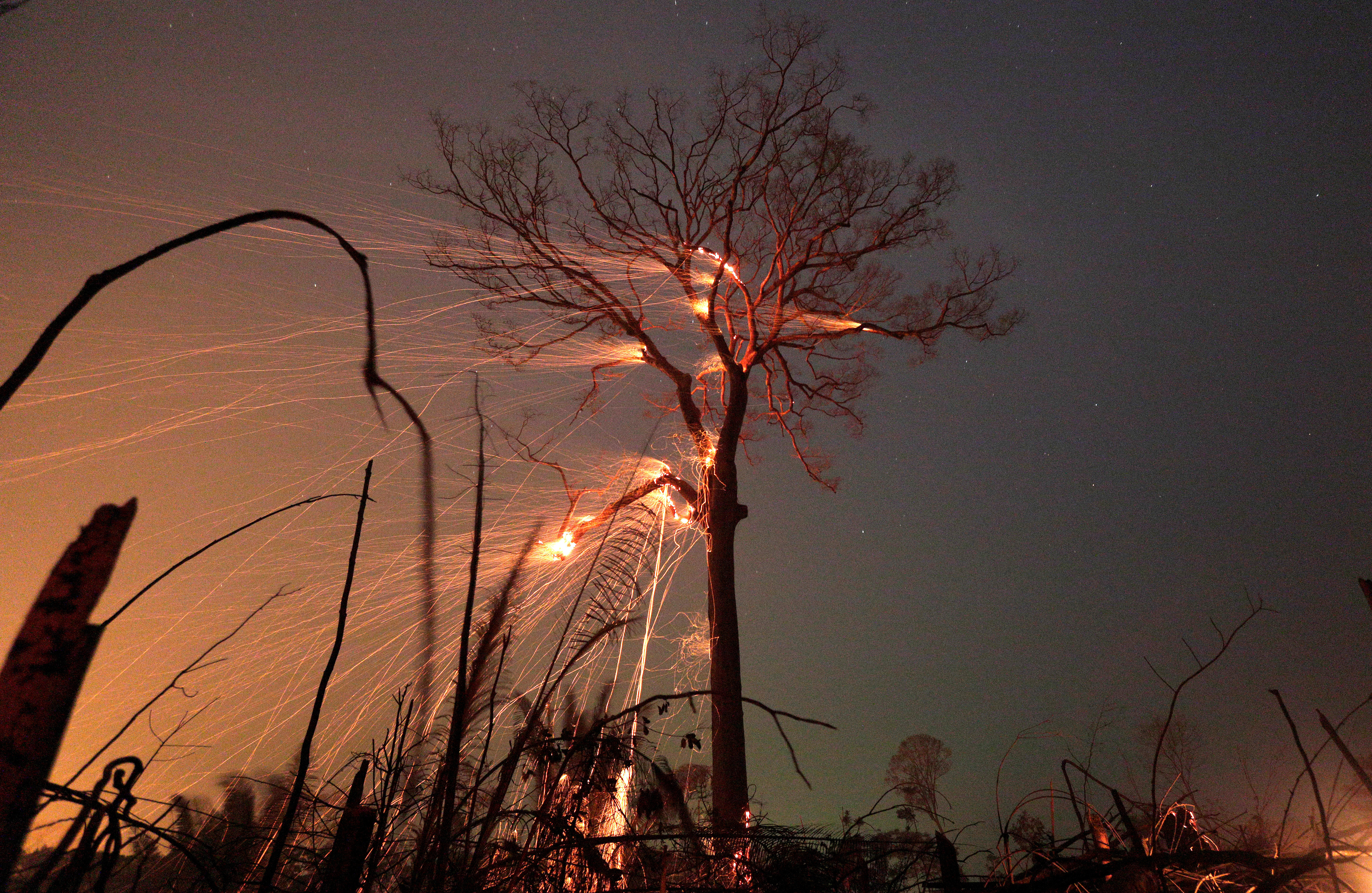 A tree in the Amazon jungle burns as it is cleared by farmers in Rio Pardo, Rondonia, Brazil, September 15, 2019. Picture taken September 15, 2019