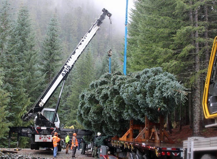 Cutting the 2018 Capitol Christmas Tree in Oregon's Willamette National Forest for delivery by truck to the National Mall in Washington, D.C
